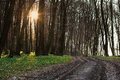 The road in the flowered spring forest at sunset nature background Royalty Free Stock Photo