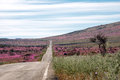 Road through the Flowering desert Atacama Royalty Free Stock Photo