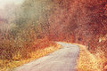 Road through the foggy woods autumn colors Stock Photography