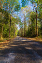 Road in the forest asphalt thung salaeng luang national park thailand Stock Images