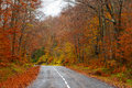 Road in the forest in autumn fall colors trees Stock Photos