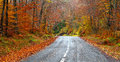 Road in the forest in autumn fall colors trees Royalty Free Stock Image
