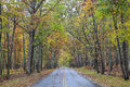 Road in a Forest in Autumn Royalty Free Stock Photo