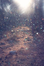 Road in forest and light burst. processed image as fantasy or magical concept. Royalty Free Stock Photo