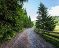 Road through forest in mountains Stock Images