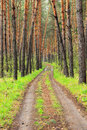 The road in the forest pine Stock Image