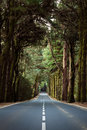 Road through forest straight in tenerife canary islands with central markings passing a of tall mature trees with thick overhead Royalty Free Stock Image
