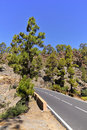 Road in the forest of Tenerife Royalty Free Stock Photo