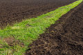 Road grass on fertile ground Royalty Free Stock Photo