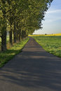Road among green fields and blue sky, nature Royalty Free Stock Photo