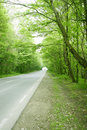 Road in a green trees forest Stock Photography