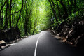 Road in jungle Royalty Free Stock Image