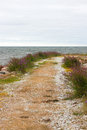 Road leading to the sea nordic nature of gotland sweden Royalty Free Stock Photo