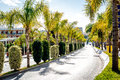 Road lined with palm trees Royalty Free Stock Photo