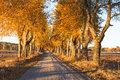 Road lined with trees in autumn Royalty Free Stock Photo
