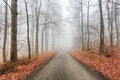 Road in misty forest at fall Royalty Free Stock Photo
