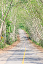 The road through the national park thailand Stock Photography