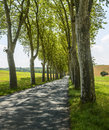 Road near albi france tarn midi pyrenees with rows of trees and summer Royalty Free Stock Image