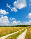 Road near forest in summer season Stock Image