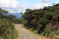 Road in park the horton plains national sri lanka Royalty Free Stock Photography
