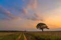 Road past the lone tree at a colourful sunset south africa Stock Photos