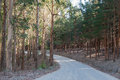 Road through pine and eucalyptus plantations