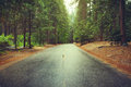 Road after the rain in the woods. Yosemite National Park, California, USA. Royalty Free Stock Photo