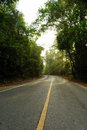 Road in rainforest thailand Royalty Free Stock Image
