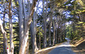 Road through redwood forest scenic view of a receding a in big sur california u s a Stock Photography