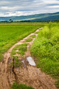 Road in rice field Stock Photography