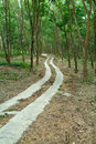 Road through a rubber plantati Stock Photos