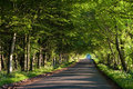 Road running through tunnel of green trees Royalty Free Stock Photo