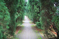 Road running through a tunnel of green trees Royalty Free Stock Photo