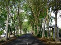 A road running through a tunnel of green trees Royalty Free Stock Photo