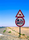 Road sign with camel Stock Photo