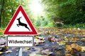 stock image of  Road sign with deer crossing in the forest