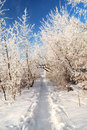 Road in the snow covered walley against blue sky Royalty Free Stock Photo
