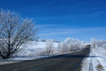 Road in snow forest under blue sky Stock Photos