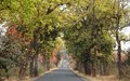 Road in spring a through the forest the season with all the trees filled with fresh green leaves and flowers Royalty Free Stock Photo