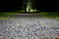 The road is strewn with small stones Royalty Free Stock Photo