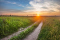 Road in summer field sunset Royalty Free Stock Photo