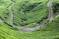 Road in the tea plantations, Cameron Highlands Stock Photos