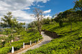 Road on a tea plantations the through in india province kerala Stock Image