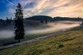 Road throurh the meadow near forest in fog