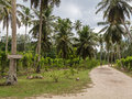 The road to the beach vanilla orchid plantation from garden of coconut and coconut fiber cochran under coconut trees in seychelles Stock Image