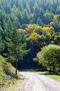 Road to colorful autumn country hill with forest in Stock Image