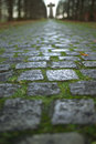 Road to cross old cobbled stones close up with autumn leaves and green grass Royalty Free Stock Photo