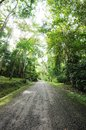 Road to the forest north of thailand Royalty Free Stock Photography
