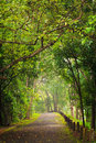 Road to forest thailand chiangmai northern of Royalty Free Stock Images
