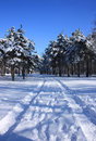 Road to snowy forest Stock Image